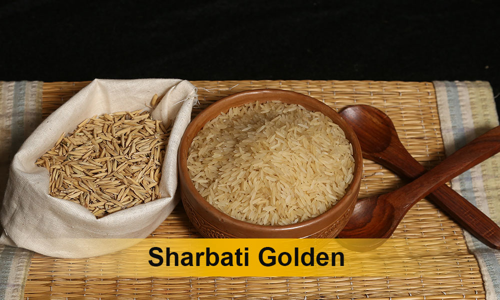 Sharbati-Golden